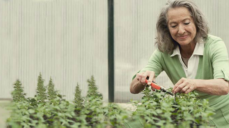 Retirement_Woman_Cutting_Plants
