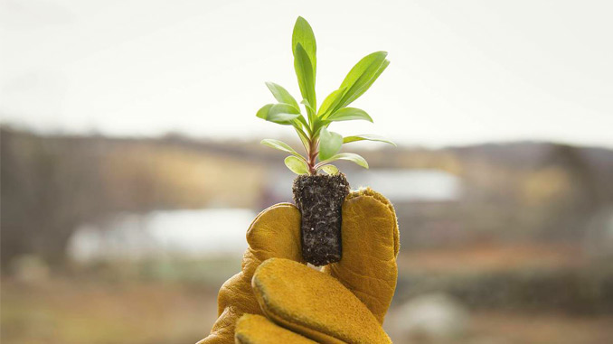Corporate_Social_Responsibility_Hand_Holding_Plant